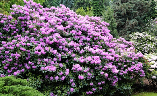 Best Easy Care Flowering Shrubs City Gardening Online